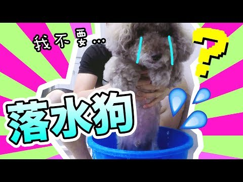 【落水狗】Muffin被變態洗身體的可怕經歷!! (中文字幕)