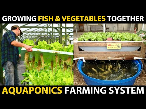 Growing Fish and Vegetables Together..! AQUAPONICS SYSTEMS | Aquaponic Farming Setup Beginners Guide