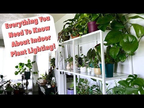 Natural Lighting For Houseplants Tips Tricks Indoor Plant