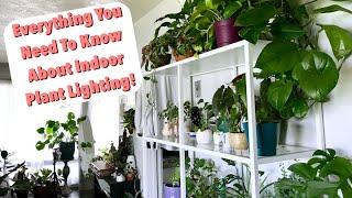 Natural Lighting for Houseplants Tips & Tricks! | Indoor Plant Lighting!