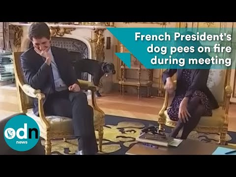 French President's dog pees on fire during meeting