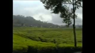 More Tea Plantations in Bandung, Java, Indonesia