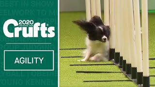 Agility  Singles Heat  Small (Jumping) | Crufts 2020