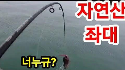 자연산좌대 이렇게 잘잡힌다고?! Korean Seat Fishing #도비도좌대낚시 #당진좌대낚시#바다좌대낚시#바다좌대#바다좌대낚시터#서해안좌대낚시#스카이좌대