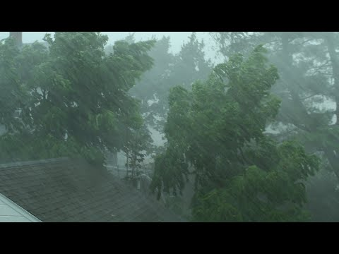 Heavy Rain and Wind Sounds For Sleeping / Relaxation - 10 Ho