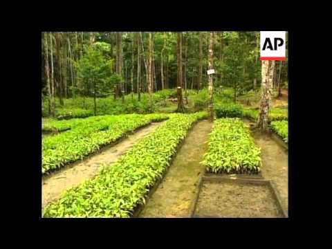 Algeria: Desert, Eritrea - Reforestation, Indonesia - Forest Development, China - Reforestation, Moz