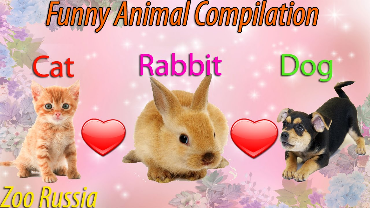 Cute Rabbits Playing With Cats and Dogs - Best Funny ...