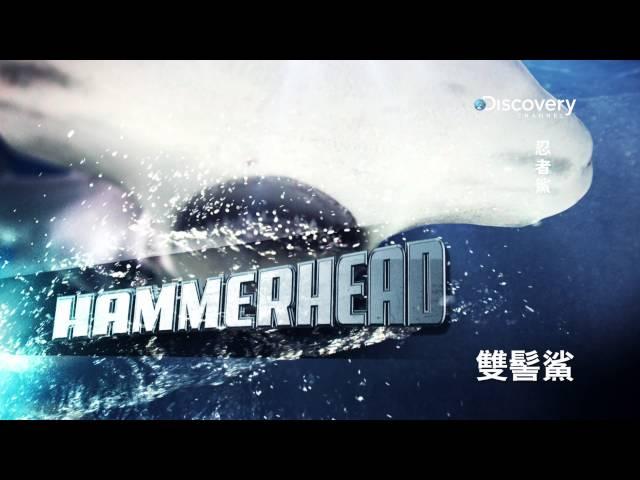 Discovery《週六鯊魚夜 - 忍者鯊 》