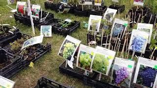 Szepietowo.   Targi  Ogrodnicze 2017.  Garden Trade Shows.