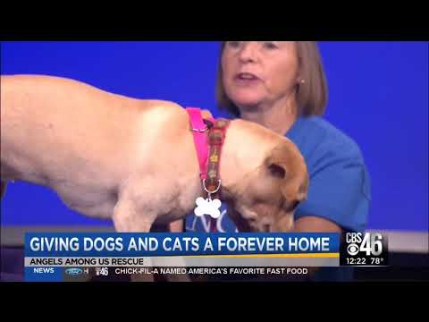 Angels Among Us Pet Rescue – Angels Among Us Pet Rescue, Inc  is a