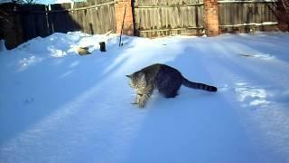 Как нужно выгуливать кота зимой