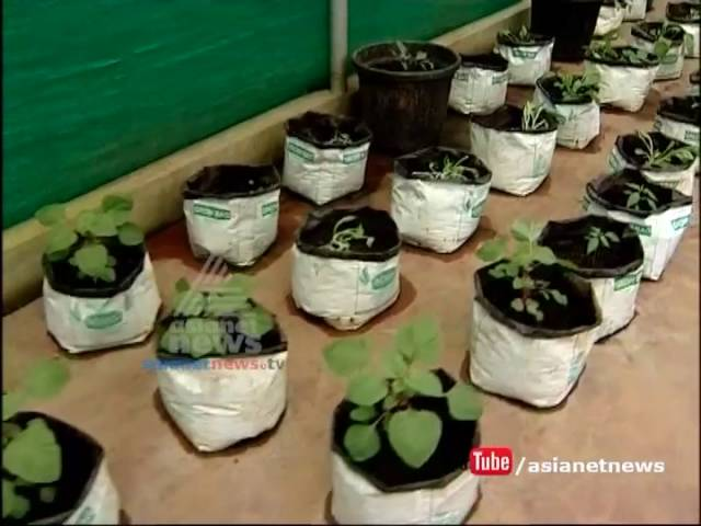 Rockfort Garden,outing to Healthacation  | Money Time 29 july 2016