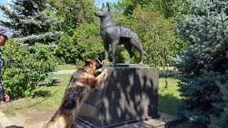 Белый Ангел в СССР! Всем Кто Любит Собак СМОТРЕТЬ ОБЯЗАТЕЛЬНО!!! (канал Мамины Истории) #блог