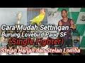 Settingan Lovebird Paud Single Fighter  Mp3 - Mp4 Download