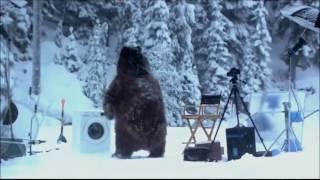 Смешной Медведь | Смотреть видео прикол
