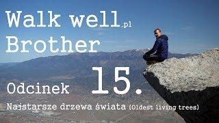 #15 PCT Walkwell.pl - Najstarsze drzewa Świata