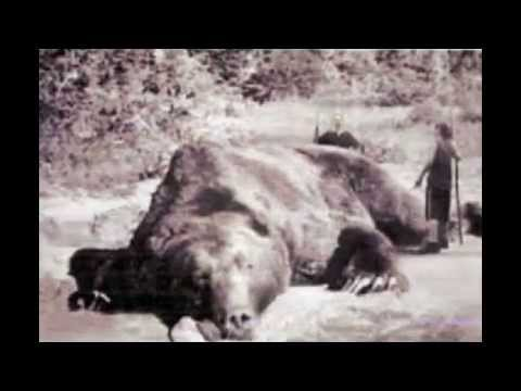 Paranormal Creatures Cryptids Mythical Monsters - YouTube