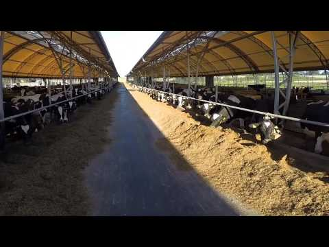 Buildings for dairy farming