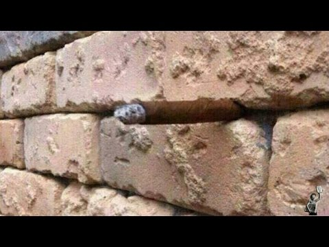 What Else Can You See In This Picture Apart From A Brick Wall?