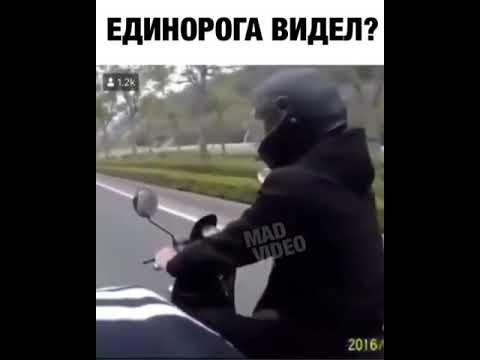 Единорог на дороге! Прикол)
