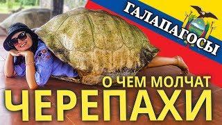 Черепахи на Галапагосских островах. Сколько лет живут, чем питаются. Идем внутри лавового туннеля