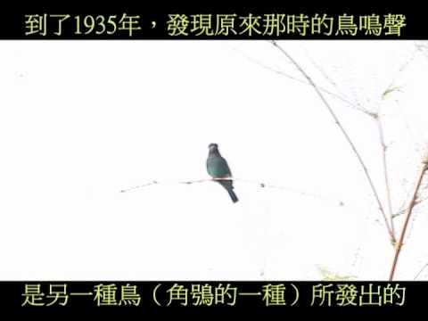 佛法僧三寶鳥Eurystomus orientalis