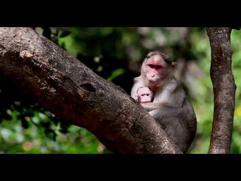 DEVRAI : Sacred Forest