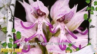 Чудеса природы || PHOTO LAND (цветы, цветы фото, цветы цветов)