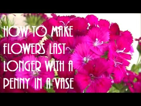 How To Make Flowers Last Longer With A Penny In A Vase Youtube