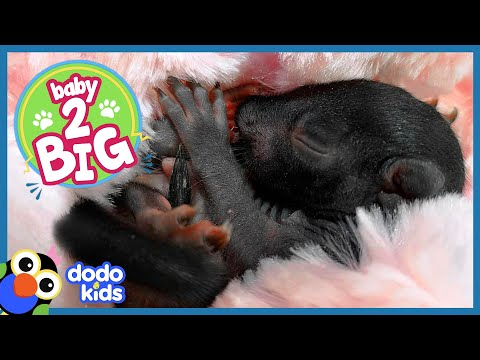 Watch These Tiny Baby Squirrels Get Big and Cute! | Animal Videos For Kids | Dodo Kids Baby To Big