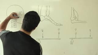 #30 - Aprenda anatomia humana desenhando/Learn human anatomy by drawing: Alavancas/Levers