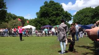 Dog Display At Paws On The Park, Leyland Festival. June 2013