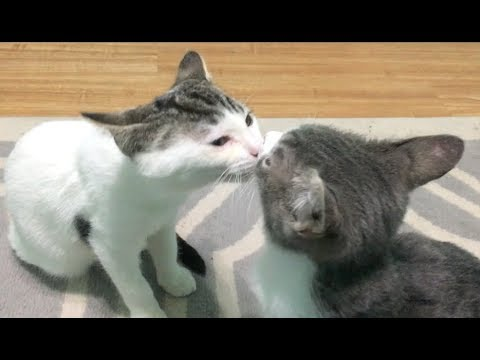 Barney And Colin Brotherly Love & Laziest Kitten Play Ever - Nursery #11