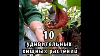 10 удивительных хищных растений