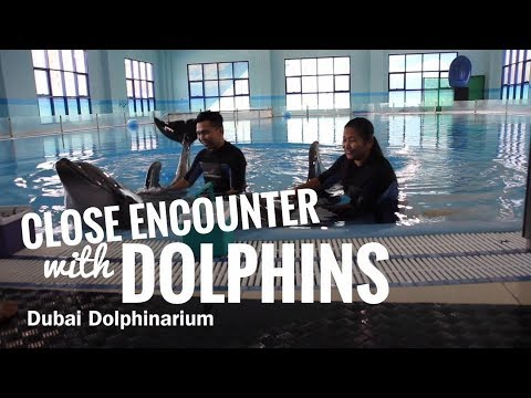 CLOSE ENCOUNTER WITH DOLPHINS INSIDE DUBAI DOLPHINARIUM