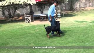 Dog Name / Lexi  Course ( Fun Commands & Agility ) Eastwind Training