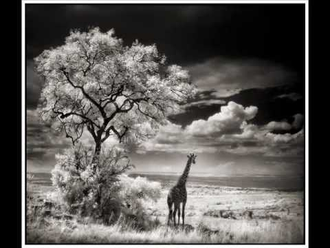 Nick Brandt : in the eye of the beholder