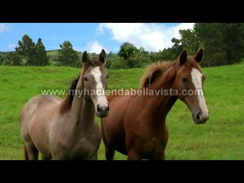 Amazing 94 Acres in Panama for Sale Beautiful Property!