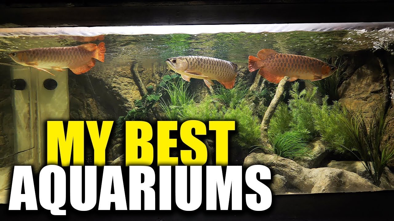 all-my-aquariums-the-king-of-diy