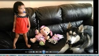 Siberian Husky Dog Is A Great Baby Sitter!