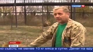 Вести  новости сегодня онлайн в 11 00 на телеканале  Россия 1  26 10 2014
