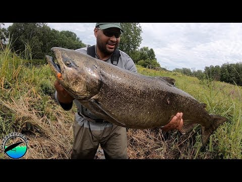 MASSIVE Kings ARE RUNNING - Salmon River 2019 - Pulaski, NY
