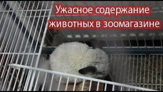 Ужасная жизнь животных в зоомагазине