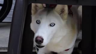 93 mascotas se esterilizaron en jornada promovida por 'Granada por os animales'