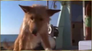 Собака упала в воду дельфин его спас