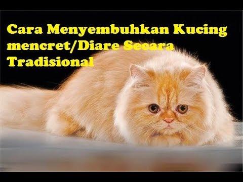 Cara Mengobati Kucing Sakit Mata Secara Alami Cara