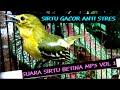 Suara Burung Sirtu Betina Jantan  Mp3 - Mp4 Download