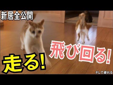 新居に引っ越して30分で野生を忘れはしゃぎまくる猫【新居全部屋公開】