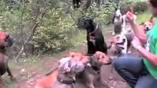 The Dog Training Secret- Free Dog Obedience Training  2011