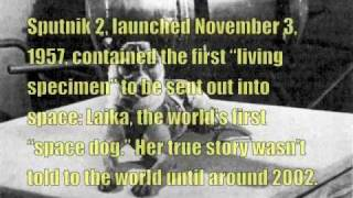 """""""Space Dog"""" Laika - The Sorry Truth"""